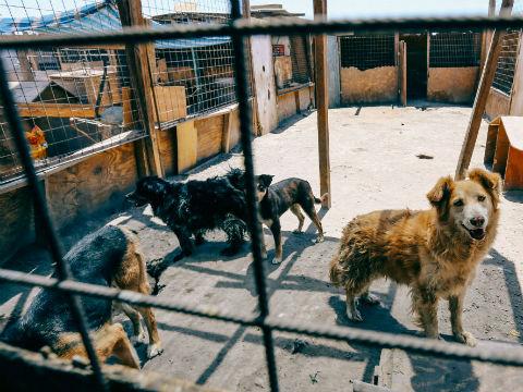 Refugio Canino es beneficiado con operativo de limpieza