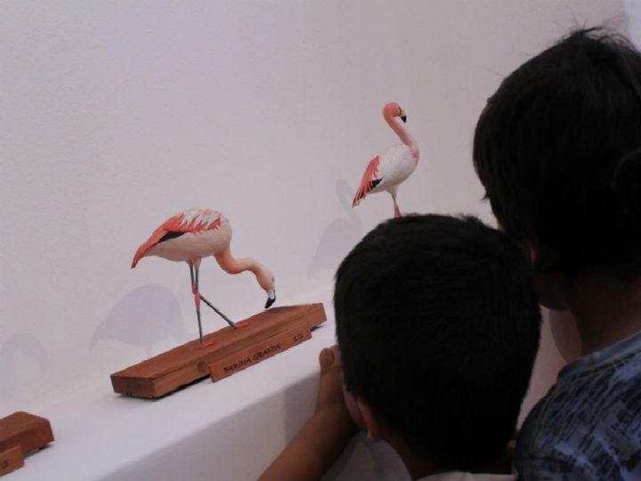 Comunidad valora rescate de biodiversidad local en exposición «Chiwanku: Aves Andinas»